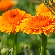 Homöopathie/ Pflanzenheilkunde